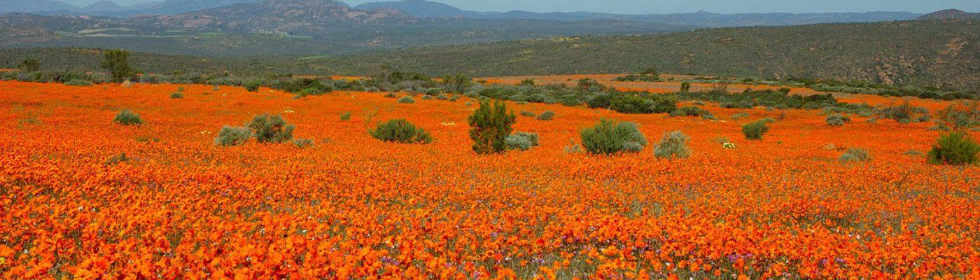 Springbok Accommodation, Business & Tourism Portal